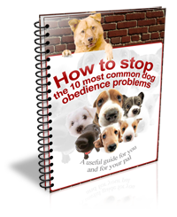 How-to-stop-the-10-most-common-dog-obedience-problems-S