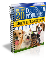 The-top-20-dog-health-problems-and-how-to-prevent-them-S