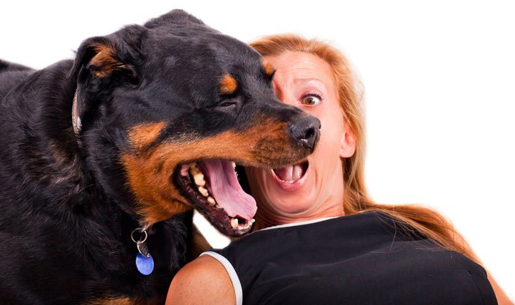 dog-bad-breath-shutterstock_111267374