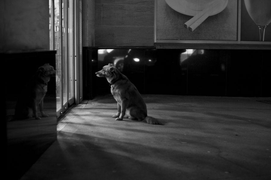dog_waiting_