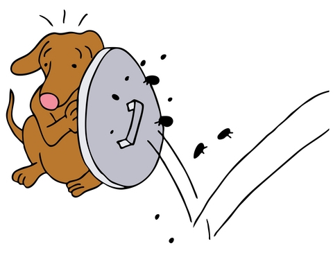 fleas-on-dogs