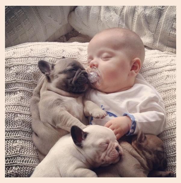 french-bulldog-and-baby-3
