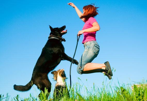 labrador-retriever-jumping-park